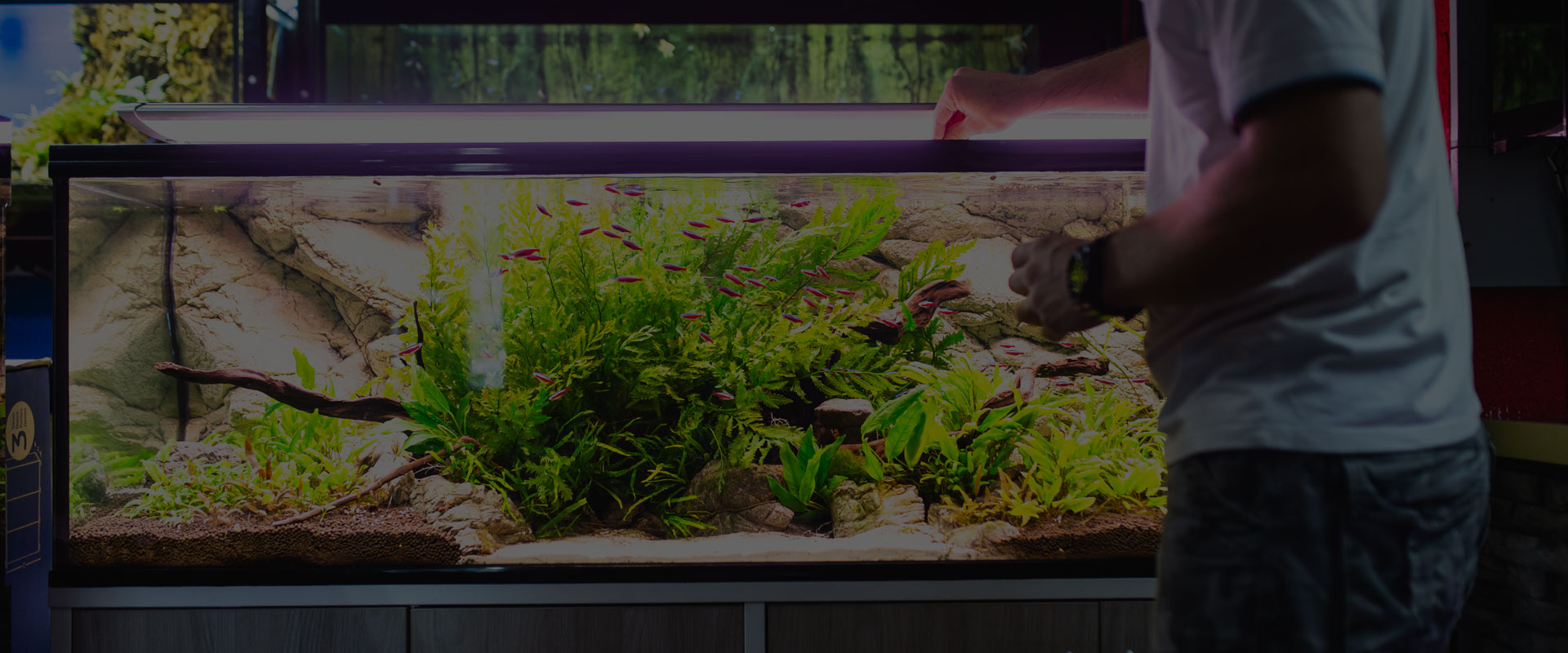 Aquariums : plantes et animaux