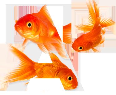 Entre l'aquariophilie et l'aquaculture