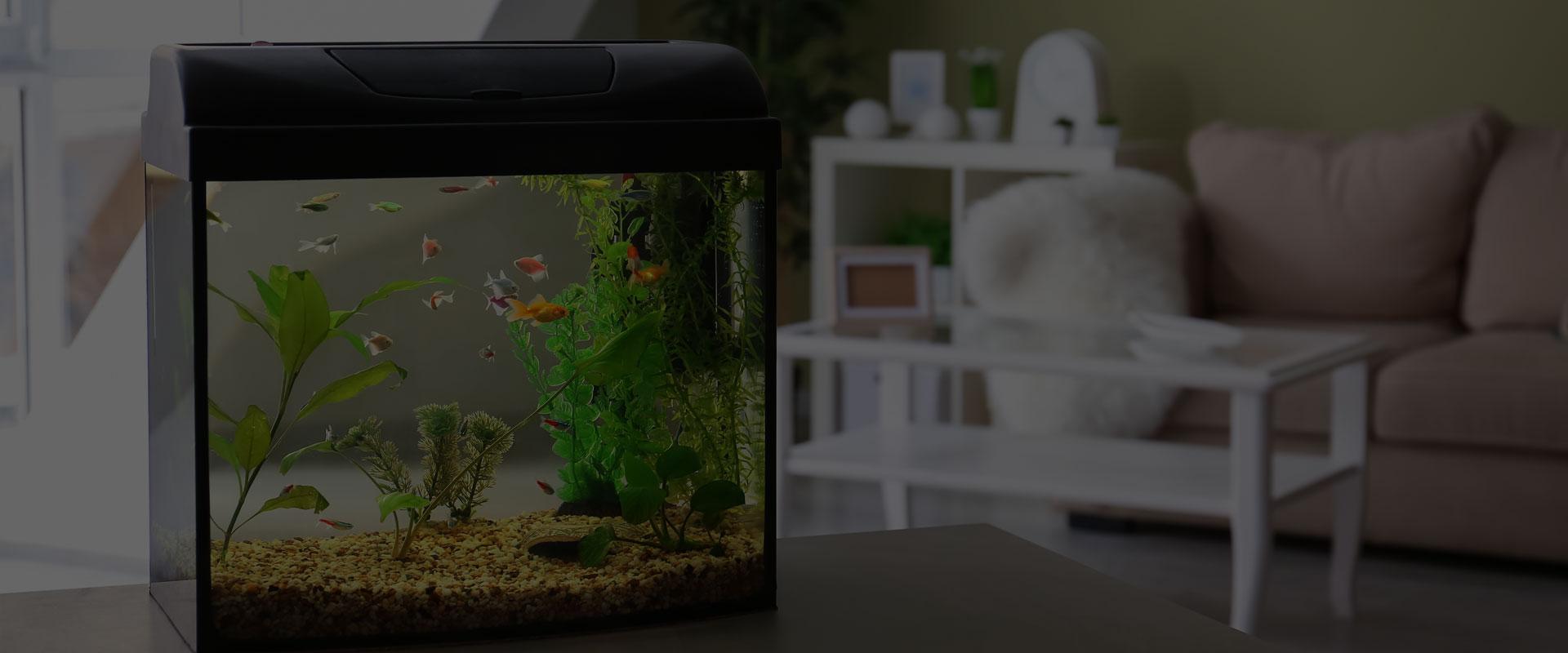 Passionnés d'aquariums